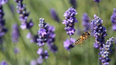Ces petites abeilles d'une si grande importance - Connaître Dieu
