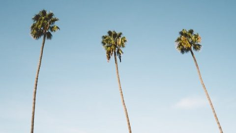 L'histoire des trois arbres – Dieu a un plan pour toi
