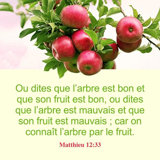 Évangile du jour – Matthieu 12:33