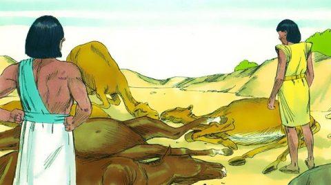 Cinquième fléau l'épidémie parmi le bétail